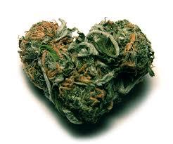Cannabisblüte in Herform